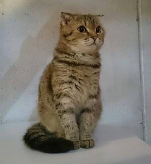 猫好きな方集まれ!!