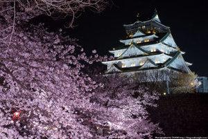 夜桜🌸BBQ🍖