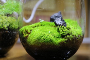 Moss system