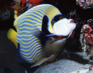 鑑賞魚サークル
