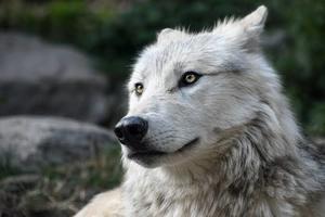人狼サークル「lycos」