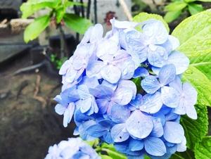 スマホでゆる〜く花撮影