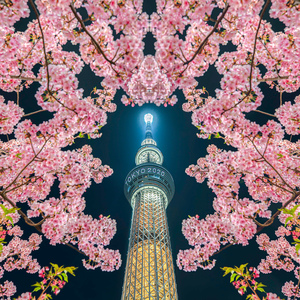 TOKYO CAMERA LIFE