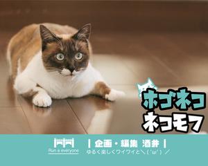 ✄【 指定ひまつぶし団 あざらし会 (・ω・っ)З 】✄
