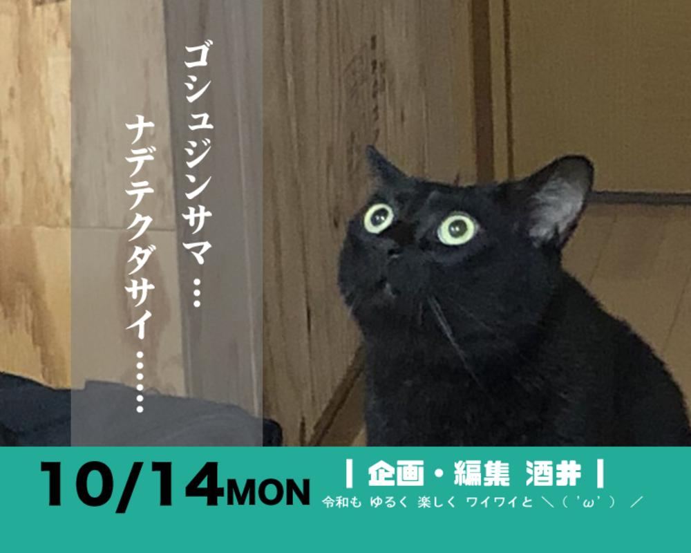 (終)■10/14 【モフ活】街歩き 保護猫とカレーを極める【カメラ旅】