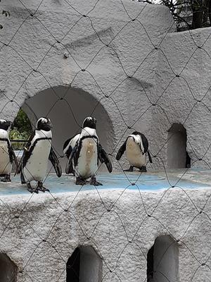 ペンギン好きサークル
