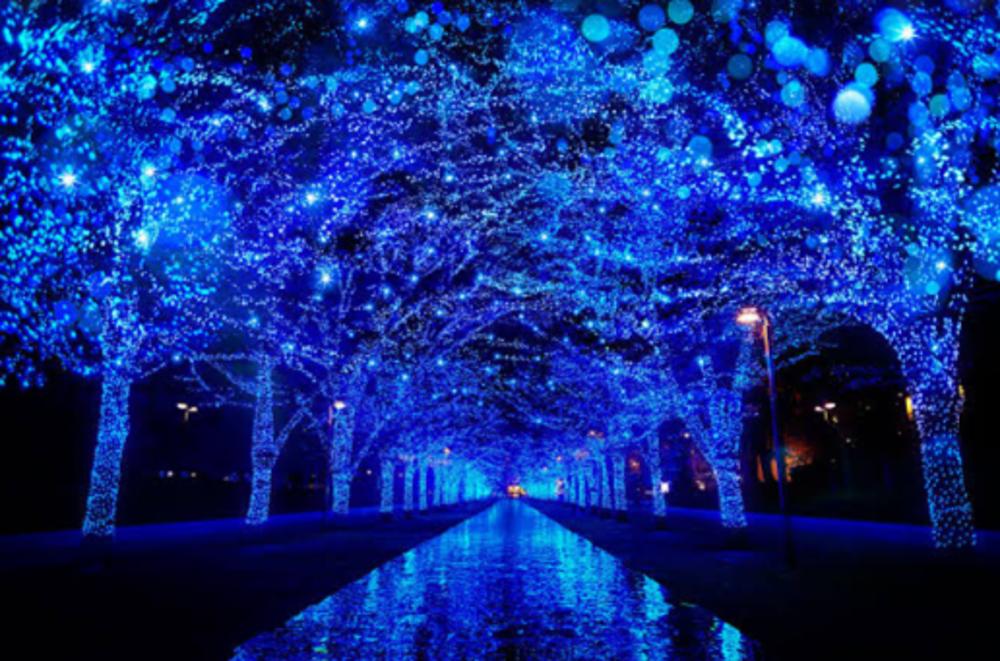 代々木公園の青の洞窟