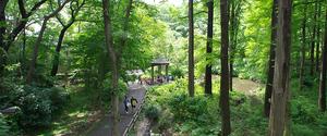 🌿👟森林浴会👟🌿(現在イベントの開催は自粛中です)