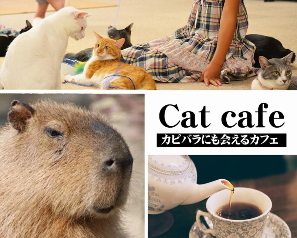 🐈【終】■3/7 【モフ企画】保護猫カフェ カピねこ に行きますฅ(・ω・)【食べ歩き】