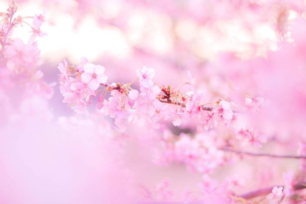 春分の日エネルギー 武蔵国安寧神社ツアー❤