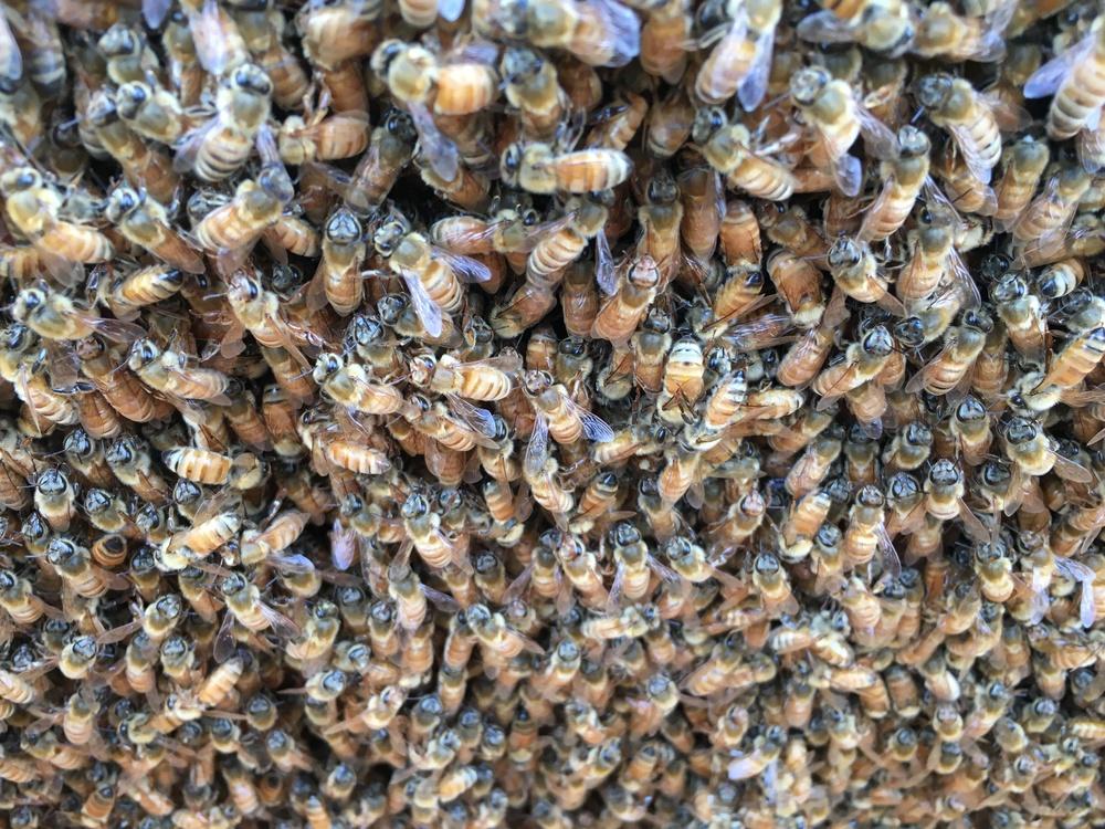 蜂いじり 土いじり