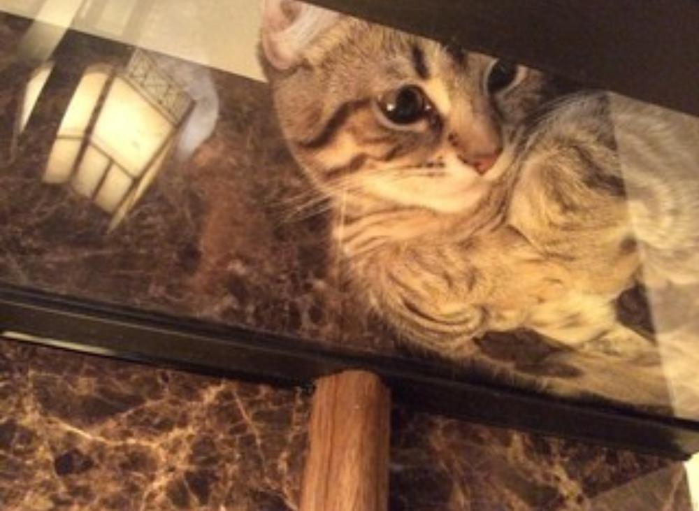 【中止】ガラス越しの猫ちゃんに癒されカフェタイム