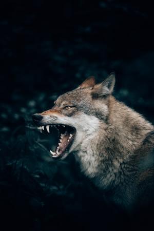 都内deフットサル・ランニング&オンラインde人狼