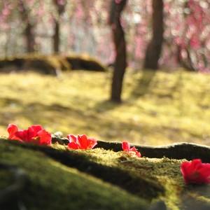 恋する京都のお散歩隊🐾