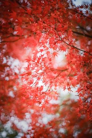 紅葉撮りに行きましょ。
