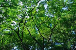 【20代30代限定】明治神宮で自然に触れよう!