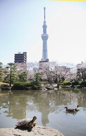 「隅田公園でピクニックしよう!雨の場合はカフェ会になります」