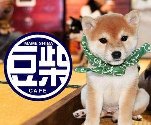 「豆柴カフェへ行こう!」究極の癒し