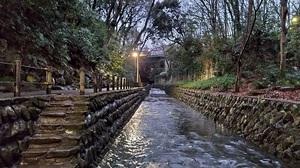「夕方の等々力渓谷を散歩しよー!早割中」
