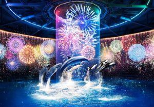 【アクアパーク品川】イルカとイルミネーションが織り成すイルカショーを観に行こう!
