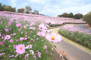 「昭和記念公園で緩~くフリスビー&ピクニックしよう!何名か早割」