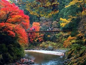 「紅葉を見に鳩ノ巣渓谷へ行こう!」