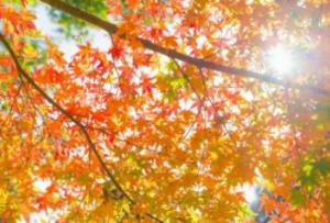 秋の新宿御苑で紅葉と散歩を楽しもう♪