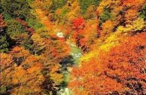 「紅葉を見に秋川渓谷へ行こう!早割中」