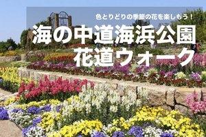 【海の中道海浜公園×花道ウォーク!】フラワースポットを巡って、季節の花を楽しもう!