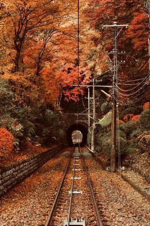 「紅葉を見に高尾山へ行こう!早割中」
