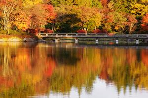 「紅葉を見に昭和記念公園へ行こう!早割中」