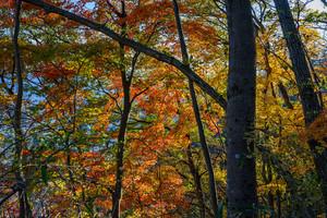 登山が好きな幹事と御嶽山に、秋を撮りに行こう!