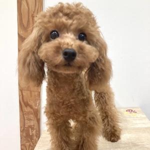 「子犬カフェに行こう!究極の癒し」