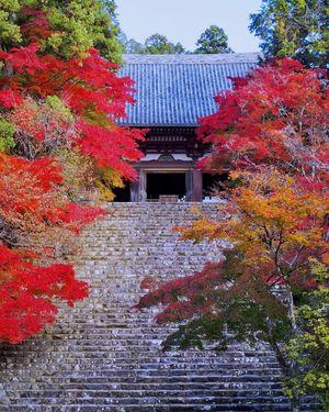 紅葉の神護寺&保津峡ハイキング