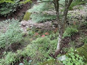 【初級者向け】カゲノブ山に登ろうぜ卍卍【富士山PG①】